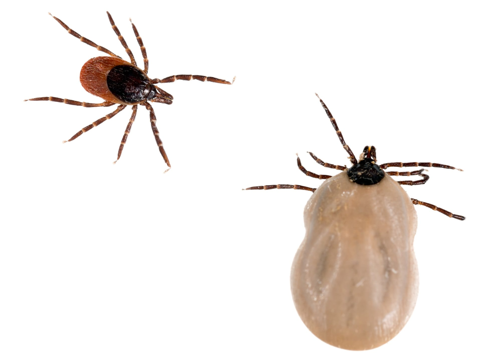 Ticks… Get Rid of Them!