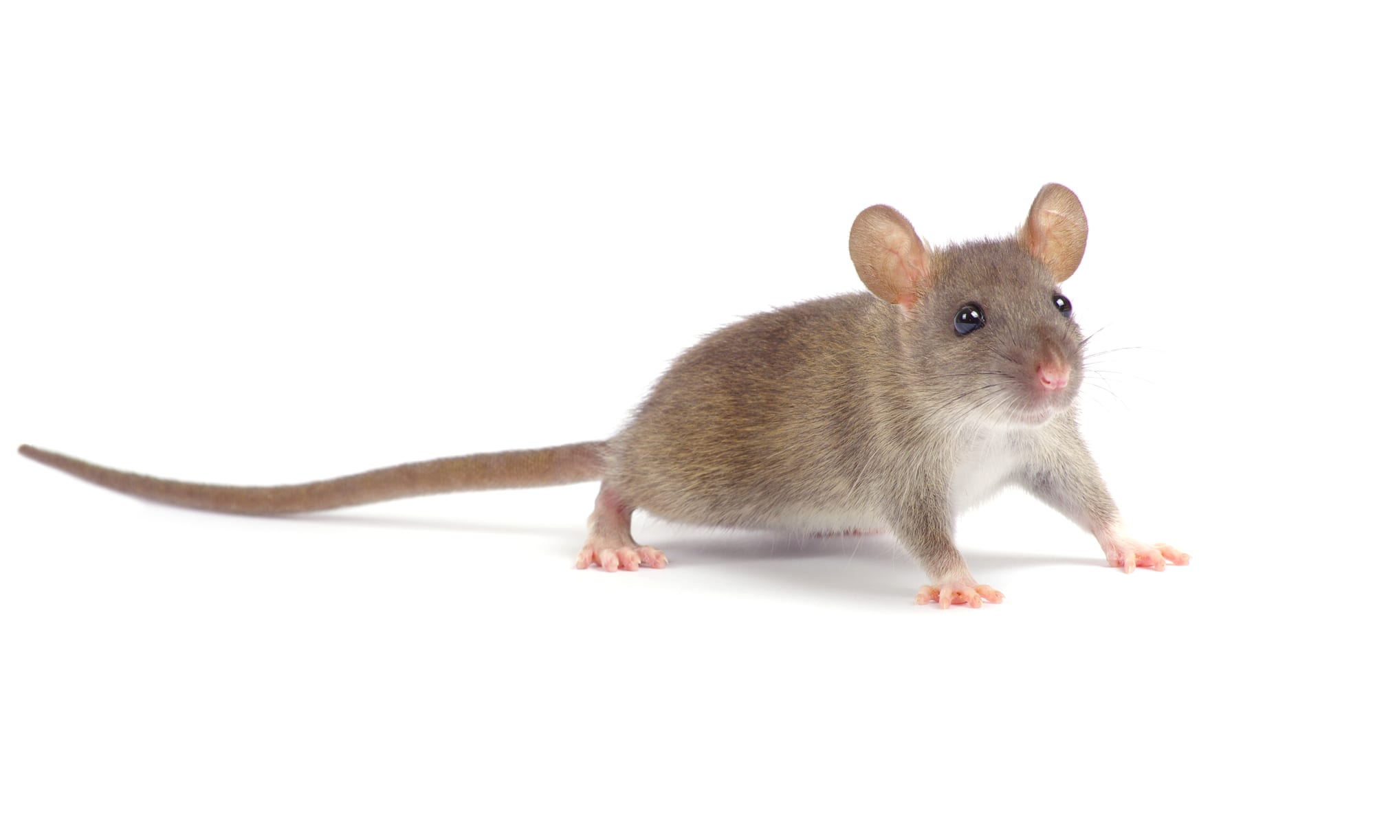 Mice…Help!